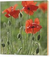 Bright Poppies 1 Wood Print