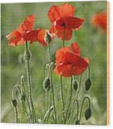 Bright Poppies 2 Wood Print