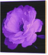 Bright Purple Perfection Wood Print