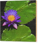 Bright Purple Water Lilly Wood Print