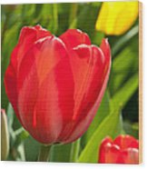 Bright Red Tulip Wood Print