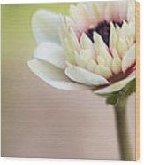 Bright Spring Wood Print
