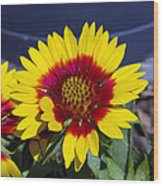 Bright Summer Flower  Wood Print