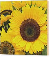 Bright Sunflower Blossoms Wood Print