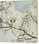 Bright White Dogwood Flowers Against A Pastel Blue Sky With Dreamy Bokeh Wood Print