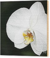 Bright White Orchid Wood Print