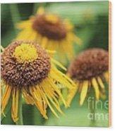 Bright Yellow Flowers Wood Print