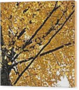 Bright Yellow Leaves Wood Print