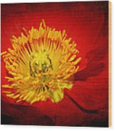 Bright Yellow Poppy Center Wood Print