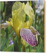 Bright Yellow Purple Iris Flower Irises Wood Print