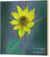 Bright Yellow Wildflower Wood Print