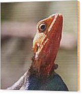 Brightly-colored Lizard Eyeing The Camera  Wood Print