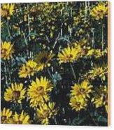 Brillant Flowers Full Of Sunshine. Wood Print
