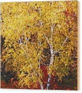 Brilliance Of Autumn On Rib Mountain Wood Print