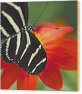 Brilliance Of Color 2047 2 Wood Print