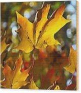 Brilliant Autumn Light And Color Wood Print