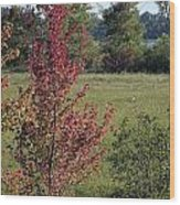 Brilliant Autumn Red Wood Print
