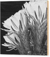 Brilliant Blossoms Diptych Left Wood Print