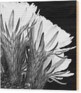 Brilliant Blossoms Diptych Right Wood Print