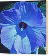 Brilliant Blue Wood Print