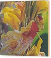 Brilliant Canna Lilies Wood Print by Robert Bray