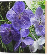 Brilliant Checkerboard Purple Orchid Wood Print
