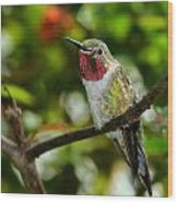 Brilliant Color Of The Ruby-throated Hummingbird Wood Print