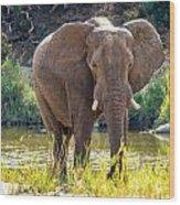 Brilliant Elephant Wood Print