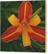 Brilliant Orange Lily Wood Print