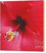 Brilliant Red Hibiscus Wood Print