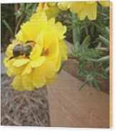 Brilliant Rose Flower With Buzzy Bee Wood Print