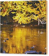 Brilliant Yellows Wood Print