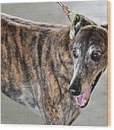 Brindle Greyhound Dog Usa Wood Print