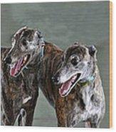Brindle Greyhound Dogs Usa Wood Print