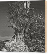Bristlecone And Wildflowers In Black And White Wood Print