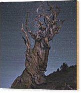 Bristlecone Ballet Wood Print
