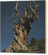 Bristlecone By Moonlight Wood Print by Karen Lindquist