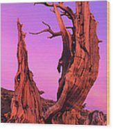 Bristlecone Pine At Sunset White Mountains Californa Wood Print