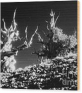 Bristlecone Twins In Infrared Wood Print