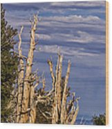 Bristlecone Warriors Wood Print