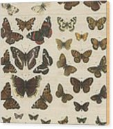 British Butterflies Wood Print