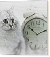 British Longhair Cat Time Goes By II Wood Print