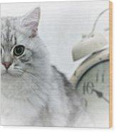 British Longhair Cat Time Goes By Wood Print by Melanie Viola