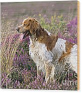 Brittany Dog, Standing In Heather, Side Wood Print