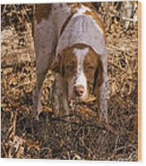 Brittany Spaniel Pixel's Pointed Woodcock Wood Print