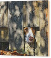 Brittany Watching Through The Fence Wood Print