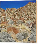 Brittlebush Leaves And Santa Rosa Mountains From Borrego Palm Canyon In Anza-borrego Desert Sp-ca Wood Print