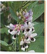 Broad Beans Wood Print