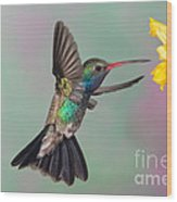 Broad-billed Hummingbird Wood Print by Jim Zipp