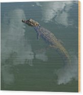 Broad-snouted Caiman Floating South Wood Print